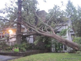 Large tree uprooted and leaning into a home